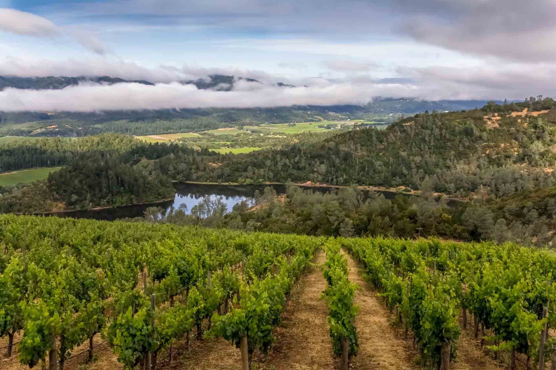 Big Stripe Cat Property Photography: Vineyard with valley view
